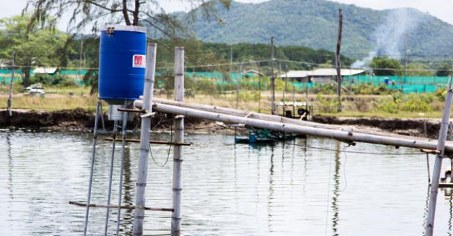 Benefits of autofeeder in aquaculture