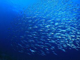 CFOOD Seeks to 'Set the Record Straight' on Seafood Sustainability