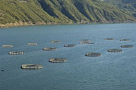 How Norway Avoids Antibiotics in Aquaculture
