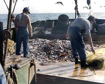 Shrimp fishery closed in Sergipe