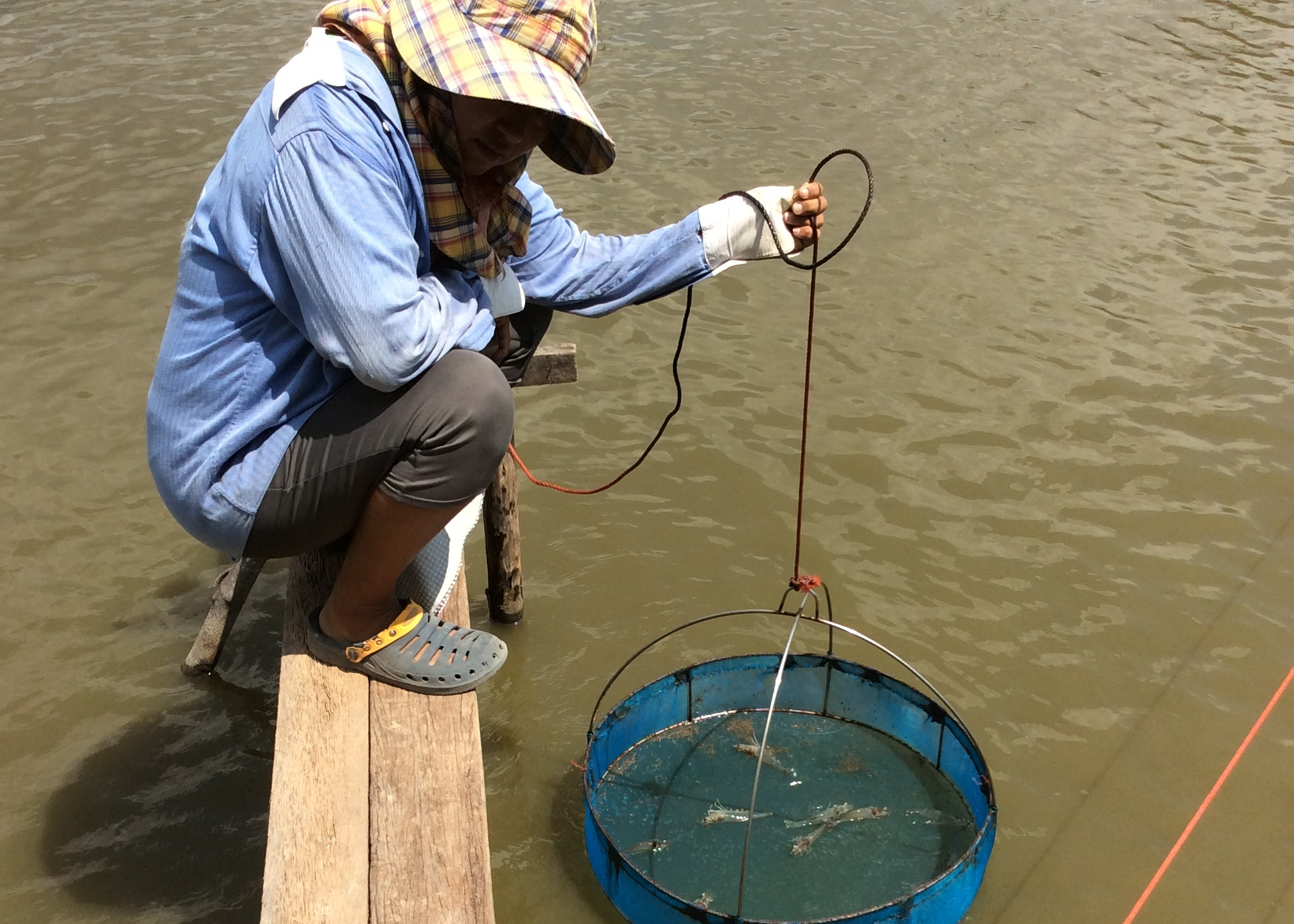 Project to reduce major aquaculture diseases